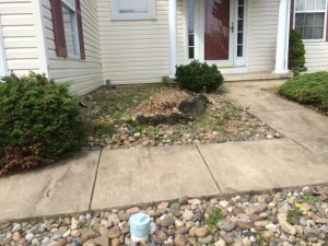 8-26-14_landscaping_before_05a