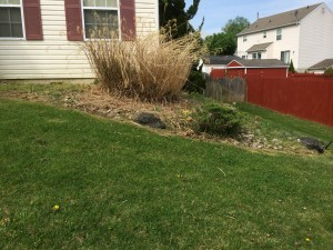 8-26-14_landscaping_before_05c